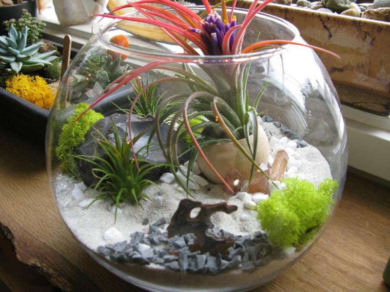 Флорариум своими руками пошаговая инструкция с фото в круглой емкости