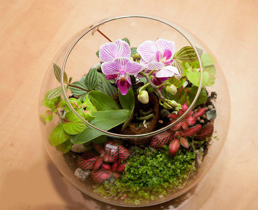 Флорариум своими руками орхидея