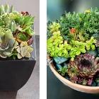 florarium018