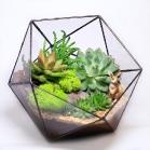 florarium025